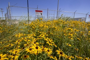 flowers near substation