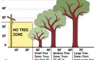 graphic of tree planting