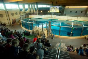 Seal tank at Minnesota Zoo