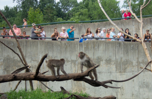Monkeys and members