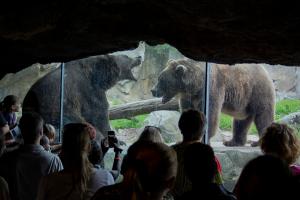 bears at zoo