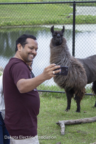 man with iphone takes picture of self and llama